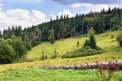 В Україні заборонили відвідувати хвойні ліси