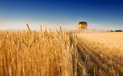 Директора фірми з Буковини звинувачують у захопленні 10 гектарів землі