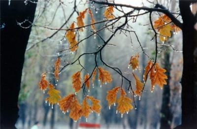 Заморозки і дощі зі снігом: синоптики розповіли, якою буде осінь в Україні