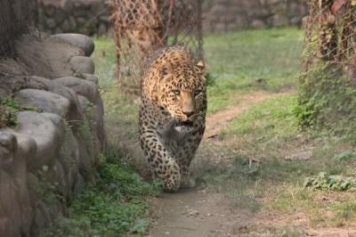 Анекдот дня: як старий пудель леопарда обдурив