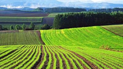 Ринок землі: 5 ключових моментів нового законопроекту
