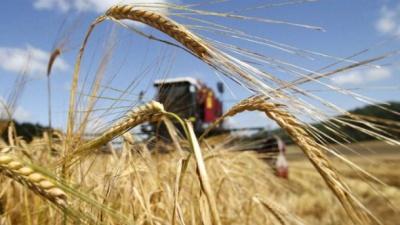 З початку року Україна експортувала зерна на майже 2 мільярда доларів