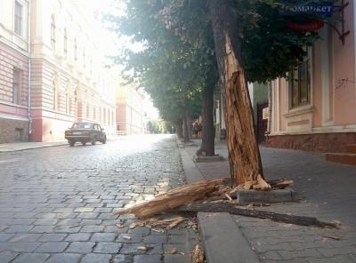 Де у Чернівцях знесуть дерева: у міськраді назвали адреси