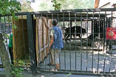 Миколаївський зоопарк передав на Буковину самицю зубра – фото