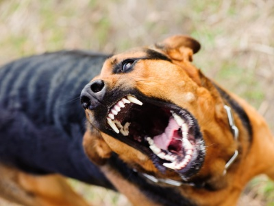 У Заставнівському районі зафіксували 5 випадків сказу в тварин