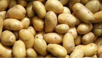 Картопля здорожчала по всій Україні, і ціна лише буде рости