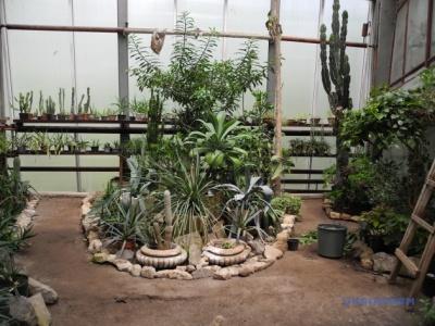 У Ботанічному саду ЧНУ через проблеми з опаленням гинуть рідкісні рослини