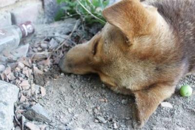 У Чернівцях перехожі виявили мертвого собаку: підозрюють вбивство