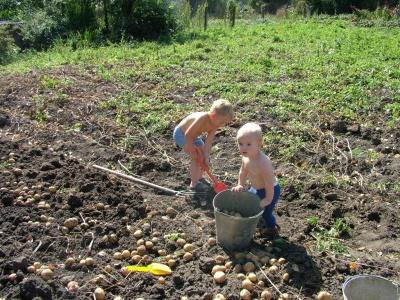 Анекдот дня: про город і картоплю