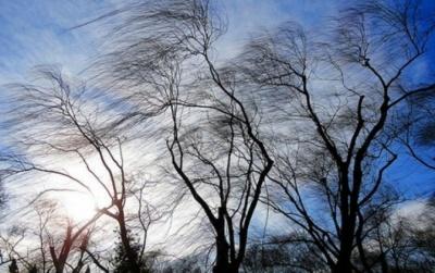 Штормове попередження на Буковині: синоптики попередили про сильний вітер