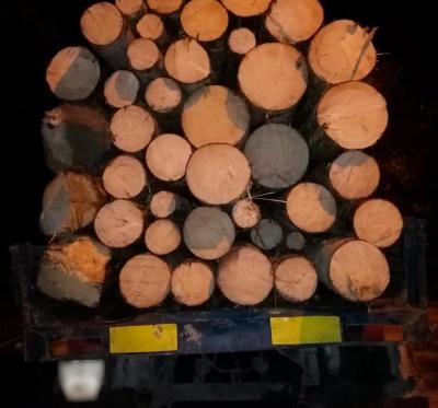 Поліція затримала двох буковинців, які викрали ліс КАМАЗом і підводами