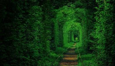 Тунель кохання і старовинний монастир. Які екскурсії пропонують чернівчанам турфірми