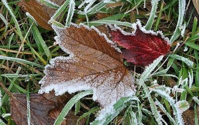Заморозки і дощі: якою буде погода на Буковині у найближчі дні
