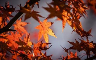Сьогодні – день осіннього рівнодення: прикмети і традиції