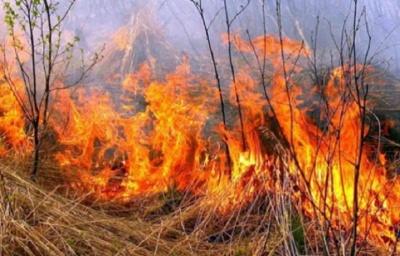 На Буковині пожежа знищила горіховий сад