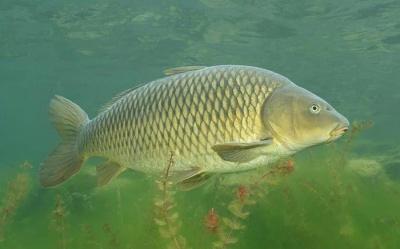 На Буковині проведуть чемпіонат з риболовлі на Дністрі