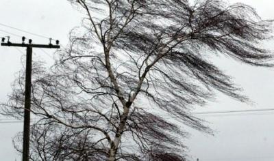 Штормове попередження: на Буковині прогнозують сильний вітер