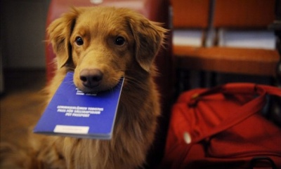 Чернівчанам нагадали про обов'язкову реєстрацію домашніх собак