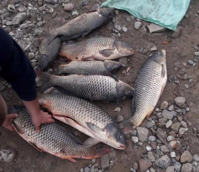 Ловили рибу забороненими сітками: на Буковині оштрафували двох рибалок-порушників
