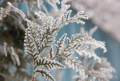 На Буковині прогнозують сильні заморозки на кілька днів