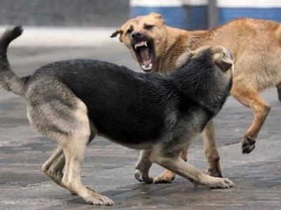 У Чернівцях бродячі собаки покусали більше 200 людей з початку року
