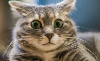 Влаштувала бійку в салоні краси: росіянка хотіла збільшити губи своїй кішці - відео