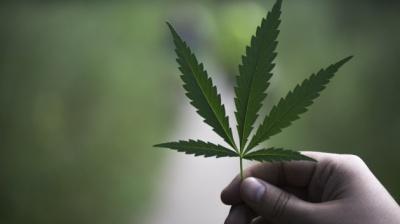 Зеленський сказав, коли в Україні легалізують марихуану