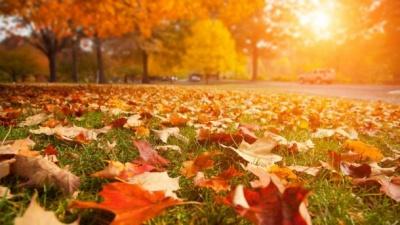 На Буковині прогнозують тиждень «бабиного літа»