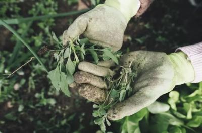Сезонна робота в Україні: скільки можна заробити, збираючи врожай