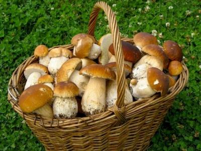 В Україні зросли ціни на гриби: причини неврожаю