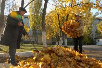 Куди можна здати листя в Чернівцях: зелентрест створив два пункти