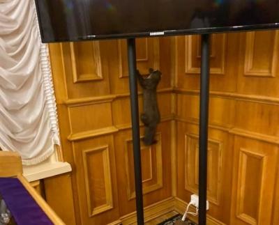 По коридорах Верховної Ради бігав дикий звір: фото та відео