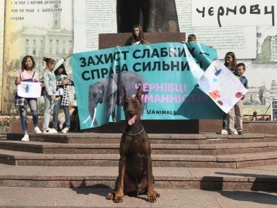Чернівці за цирк без тварин: сьогодні на Гравітоні пройде зоозахисна акція