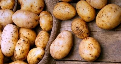 Аналітики прогнозують зниження цін на картоплю