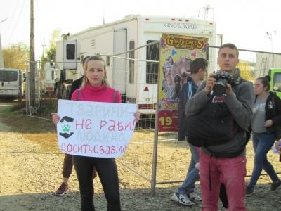 Як чернівчани ставляться до цирків з тваринами: репортаж із зоозахисної акції