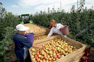 Доробилися: на Буковині фермери вже беруть кредити на зарплати