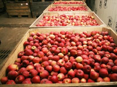На Буковині яблука подорожчали втричі
