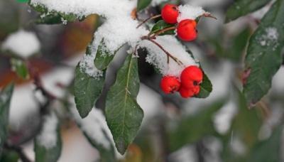 Синоптики розповіли, коли в Україні випаде перший сніг