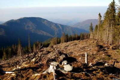 Нардепи заборонили суцільну вирубку лісів на гірських схилах Карпат