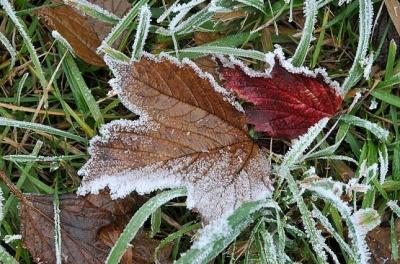 Цієї ночі на Буковині очікується до 7 градусів морозу