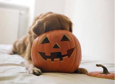 У Чернівцях кличуть на арт-пікнік із собаками розмальовувати гарбузи
