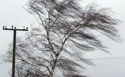 Синоптики попередили про сильний вітер на Буковині