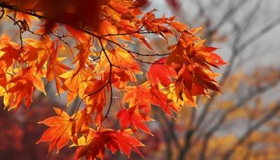 """Прощавай """"бабине літо"""". 7 листопада розпочнеться похолодання"""