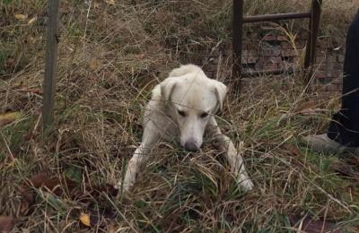 У Чернівцях комунальники врятували собаку, який впав у глибоку яму