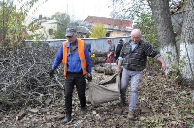 Шкідливі та небезпечні: горіхові дерева Ольги Кобилянської зрізали