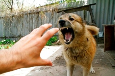 Покусав господарів і помер: у Чернівцях у домашнього собаки виявили сказ