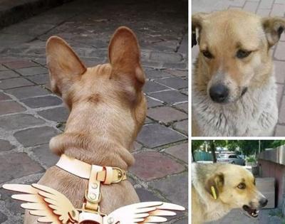 Приручили собаку і відмовились від нього: Артем Жук розповів про безвідповідальних чернівчан