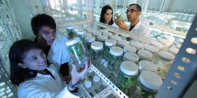«Штучний листок» дозволить перетворити вуглекислий газ у паливо