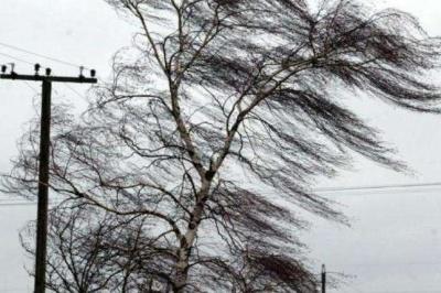 На Буковині на три дні оголосили штормове попередження через сильний вітер