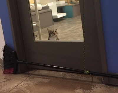 """У США до """"одиночної камери"""" посадили кота, який постійно випускав інших тварин у притулку"""
